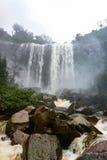 Regen Forest Waterfall Stock Afbeeldingen