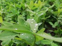 Regen grüner Pic stockbild