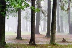 Regen in het bos Stock Afbeeldingen