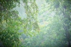 Regen in het bos, de natuurlijke achtergrond en de textuur Vaag abstract beeld Royalty-vrije Stock Foto's