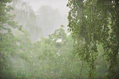 Regen in het bos, de natuurlijke achtergrond en de textuur Vaag abstract beeld Stock Afbeeldingen