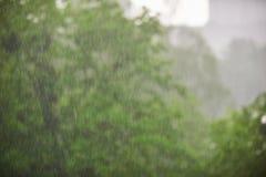 Regen in het bos, de natuurlijke achtergrond en de textuur Vaag abstract beeld Stock Foto's