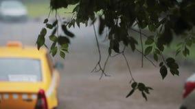 Regen het gieten neer op takken van een boom Vage auto overgaan door en een taxi die op de achtergrond stock video