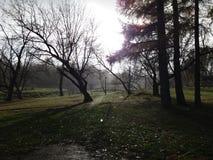 Regen in het park Stock Foto's