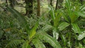 Regen im Dschungel stock video footage