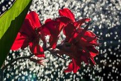 Regen im Garten Stockbild