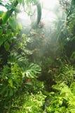 Regen im tropischen Regenwald stockfotografie