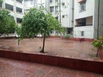 Regen mit Indien-Baum bringen auch unter Stockbild