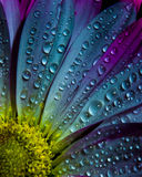 Regen natte bloem Royalty-vrije Stock Afbeeldingen