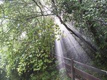 Regen, Nebel und Sonnenstrahlen im forrest Lizenzfreies Stockbild