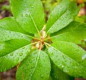 Regen op bladeren Stock Foto
