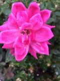 Regen op een bloem stock afbeelding