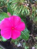 Regen op een bloem stock foto