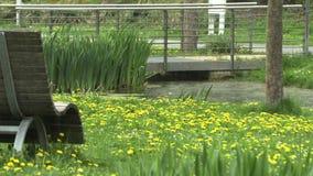 Regen op het meer in het park stock video