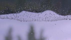 Regen op het Web stock footage