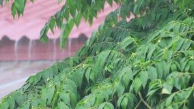 Regen op oud zinkdak stock footage