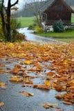 Regen-Slicked weg met gebladerte Royalty-vrije Stock Foto