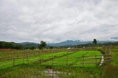 Regen-Sturm auf Reisfeld bei Pai bei Mae Hong Son Thailand Stockbilder