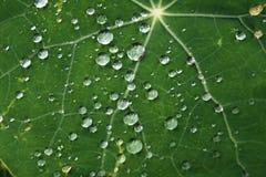 Regen-Tropfen Stockbild