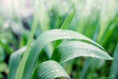 Regen-Tropfen auf den Blättern Stockfotos