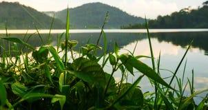 Regen-Tropfen auf den Blättern nahe dem See stockfoto