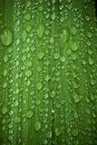 Regen-Tropfen auf einem grünen Blatt Stockbilder