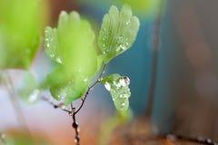Regen-Tropfen auf Farn Lizenzfreie Stockfotos