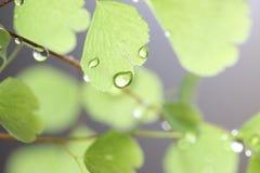 Regen-Tropfen auf Farn Stockfotos