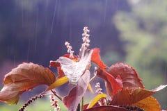 Regen in tropische bossen - Yogyakarta Indonesië royalty-vrije stock afbeelding
