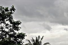 Regen in tropische bossen - Yogyakarta Indonesië royalty-vrije stock foto's