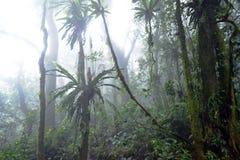 Regen tropist Dschungel lizenzfreies stockbild