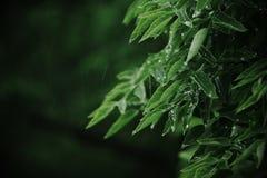 Regen und Blätter Stockfoto