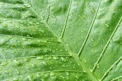 Regen und Blatt Stockfotografie