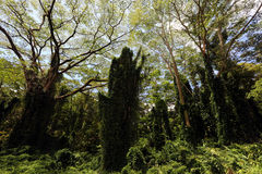 Regen-Wald Stockfoto