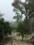Regen-Wald Lizenzfreie Stockfotografie