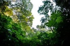 Regen-Wald Lizenzfreies Stockbild