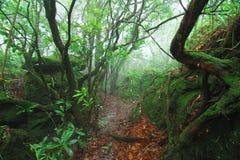 Regen-Wald stockbilder