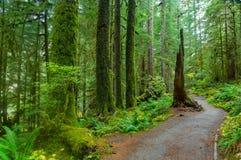 Regen-Wald in Oregon Lizenzfreie Stockbilder
