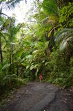 Regen-Waldweg EL Yunque Lizenzfreie Stockfotos