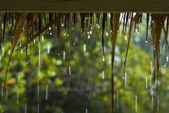 regenachtig Stock Afbeeldingen