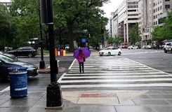 REGENACHTIG DAGweer IN HOOFDWashington DC royalty-vrije stock afbeelding
