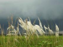 Regenachtig gebied stock fotografie