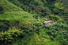Regenachtig landschap in Buenavista, Quindio stock afbeelding