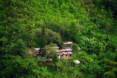 Regenachtig landschap in Buenavista, Quindio stock fotografie