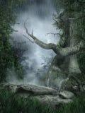 Regenachtig landschap met een boom Stock Afbeelding