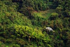 Regenachtig landschap in Quindio Bergen met tropische regenwouden worden behandeld dat Quindio royalty-vrije stock afbeelding