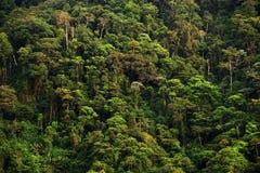 Regenachtig landschap in Quindio Bergen met tropische regenwouden worden behandeld dat Quindio royalty-vrije stock afbeeldingen