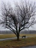Regenachtig park Stock Afbeeldingen
