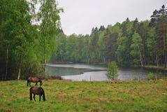 Regenachtig Zweeds landschap Stock Foto