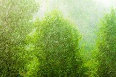 Regenachtige buitenvenster groene textuur als achtergrond Stock Afbeelding